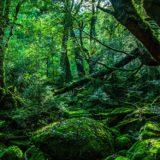 植物エキスが世界を救う?(アイ・ジャパンの企業理念)